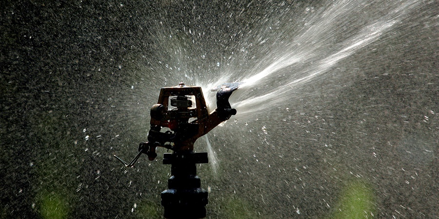 Watering Tips for a Hot Summer