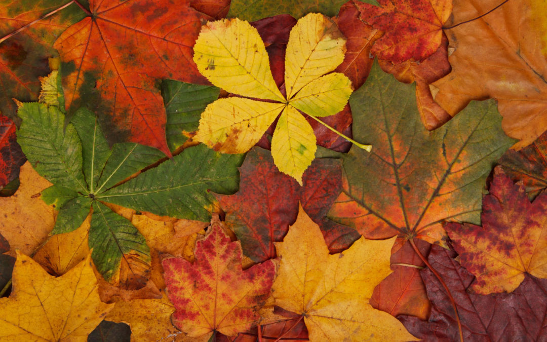 Fall Lawn Care Services & Leaf Removal
